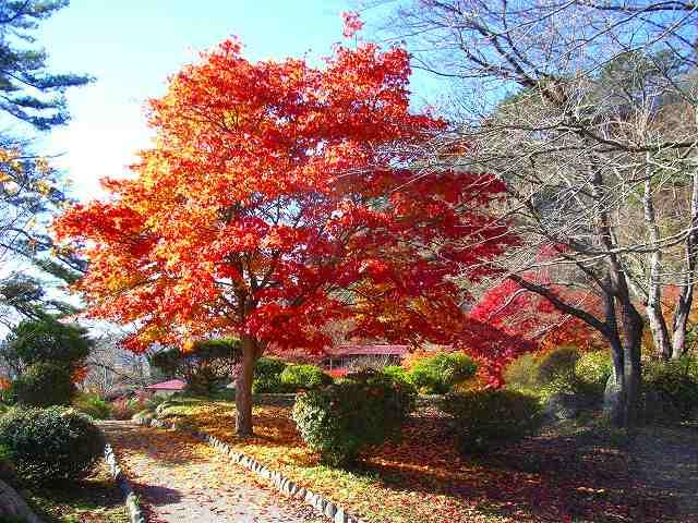 s-植樹、きみまち坂 006.jpg